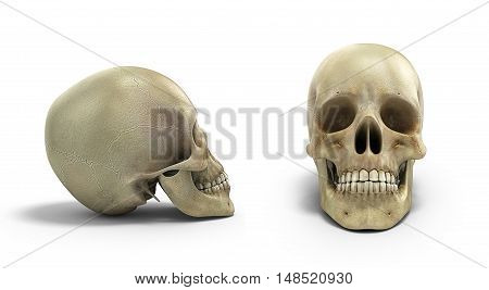 Collection Of Human Skull On Isolated White Background 3D Render
