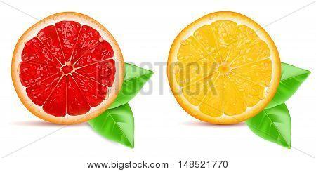 Red grapefruit slice and orange slice with leaf isolated on white background. Vector illustration.
