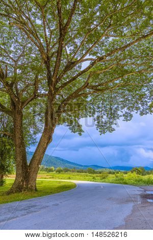 Curved road inside a natural park in Chiang Mai Thailand showing big branched tree and distant mountains with cloudy sky