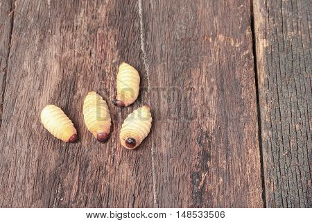 Sago beetle worm Red palm weevil (Rhynchophorus ferrugineus) Popular food larva in Southern Thailand on the wooden floor Top view