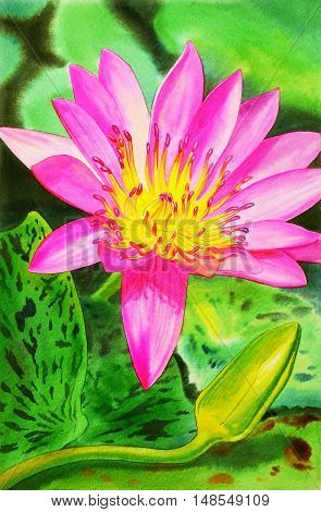Watercolor painting original realistic pink color of lotus flower and green leaves in pond background. Original painting