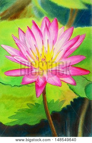 Watercolor painting original realistic pink colorr of lotus flower and green leaves in pond background. Original painting