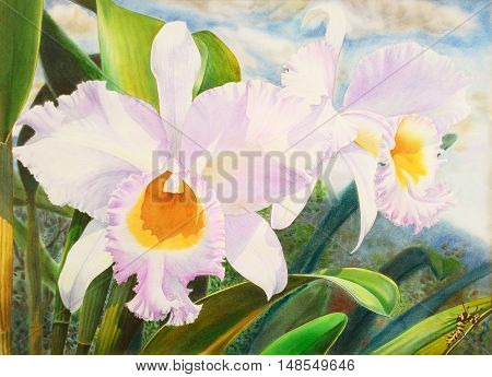 Watercolor painting original realistic white flower of orchid and green leaves in blue background. Original painting