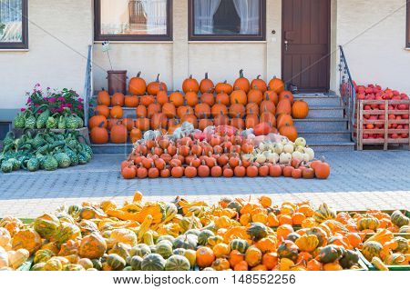 Different pumpkins and pumpkin squashes offered for a sale