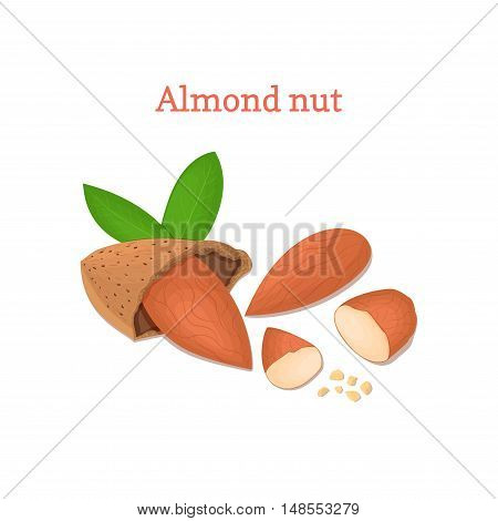 Almond nut vector illustration of a handful of peeled nuts and in shell isolated on white background it can be used as packaging design element, printing brochures on healthy and vegetarian diet