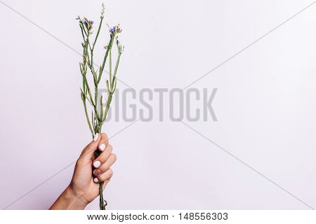 Dry Bunch Of Stems Without Flowers In A Female Hand With A Manicure On A Light Background