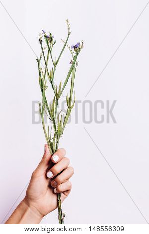 Dry Bouquet Without Flowers In A Female Hand With A Manicure On A Light Background