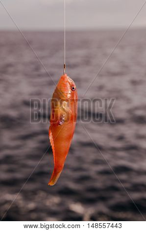 One Sea Fish Hooked