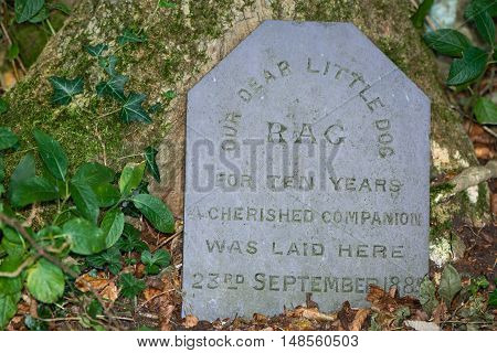 Tombstone to pet dog buried in 1885. A nineteenth century Victorian memorial to a family pet in a British woodland