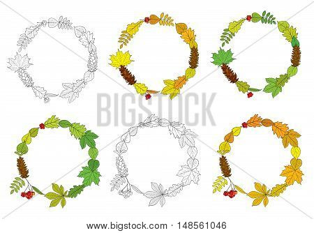 Vector set of round, outline wreaths, compositions of different autumn and summer tree leaves, Rowan berry bunches, acorns, chestnuts and pine cones, isolated on white background. Frames for design.