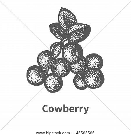 Vector illustration doodle sketch hand-drawn cowberry with leaves and branches. Isolated on white background. Berry painted dots and lines. The concept of gardening and harvesting.