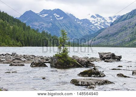 Tree on a rock in the water Multinskiye lake Altai mountains