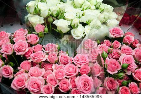 roses pink many beautiful praznik birthday valentines day love wedding armful tenderness romance