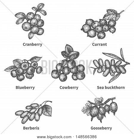 Vector illustration sketch doodle hand-drawn set berries with an inscription. Isolated white background. Collection of berries on a branch. The concept of eco healthy diet.