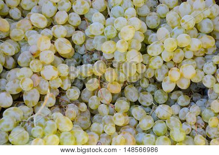 fresh green grapes for sale in market. texture