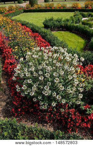 field of flowers with red yellow and white flowers in public ornamental park
