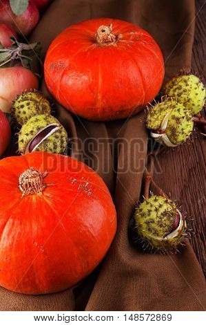 Pumpkin with conker top view on brown background