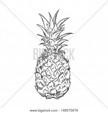 Vector Single Sketch Pineapple