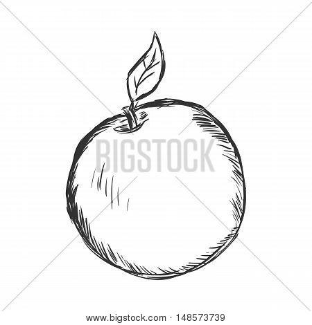 Vector Single Sketch Apple