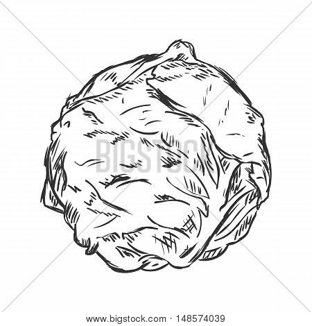 Vector Single Sketch Cabbage
