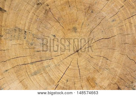 cracked wood board background / Texture of wood background close up