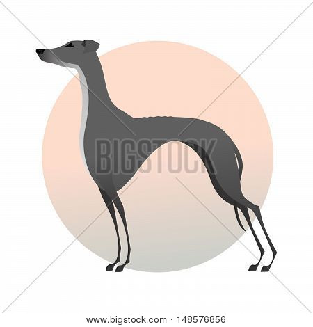 Stylized image dog. Standing greyhound isolated on background.