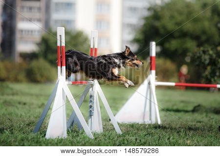 dog hurdling over a jump at an agility event sports competitions of dogs in the summer in the park