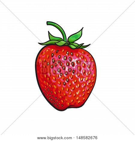 Ripe red strawberry, realistic drawing vector illustration isolated on white background. Single strawberry with green leaves on white background, botanical illustration, design element