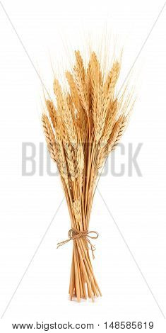 Bundle Of Wheat Isolated On A White Background