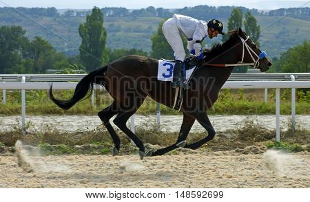 Horse race for the traditional prize Northern Caucasus in Pyatigorsk,the largest in Russia.