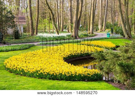 Flowerbed with yellow daffodil flowers blooming in spring garden