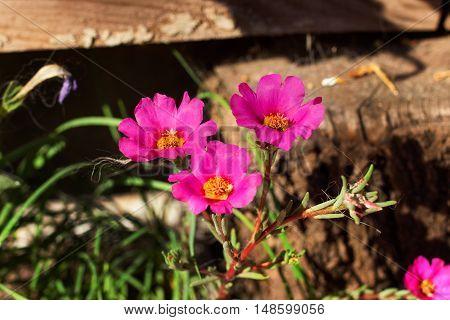 pink wildflowers meadow, wildflowers meadow, wild flower, cosmos flower, flower background
