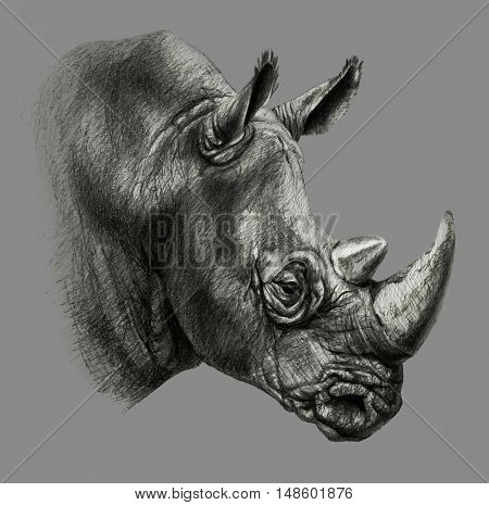 Pencil drawing. rhino's head in profile isolated on gray background