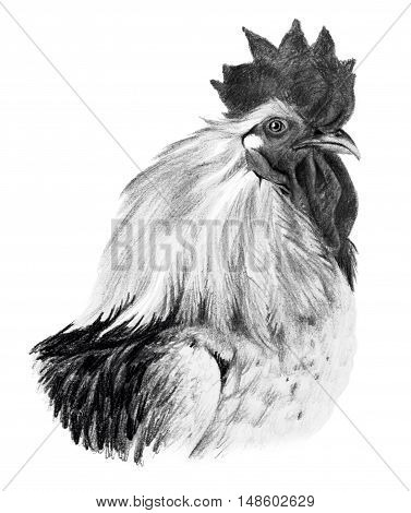 Graphic drawing. Head of rooster in profile on a white background.