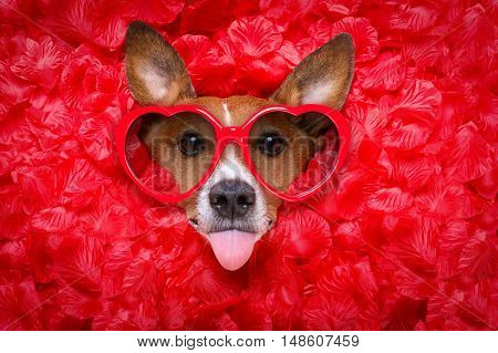 Dog Love Rose Valentines Selfie