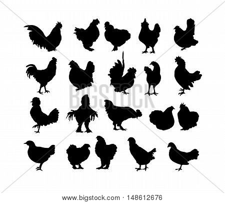 Big collection of cock and hen s black silhouettes isolated on white background. Set of roosters - symbol of chinese New Year 2017. Different breeds of chickens.