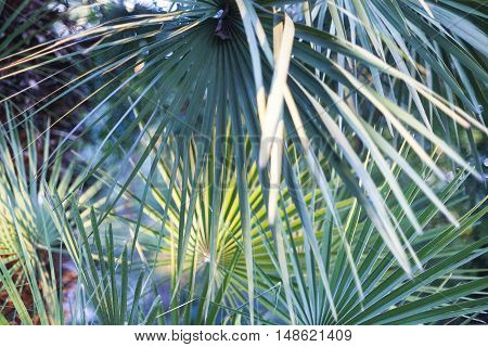 A group of palm leaves with varying shades of green.