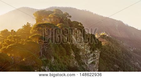 Morning light through the cedars on Mount San Rocco in Camogli, Italy