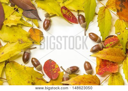 Acorn and autumn leaf frame on white background