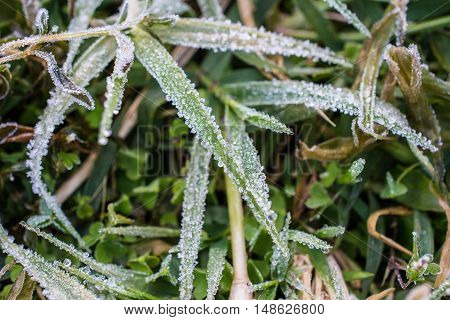 The grass getting frost on high mountains in the winter season in Thailand.