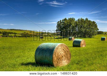 Scenic Farmland