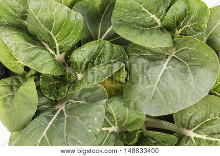 green bok choy vegetable ,fresh vegetable  background