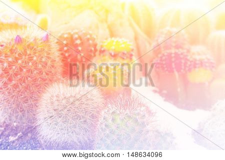 close up cactus desert plant with color filter