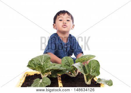 little boy fertilizer to vegetables in pots