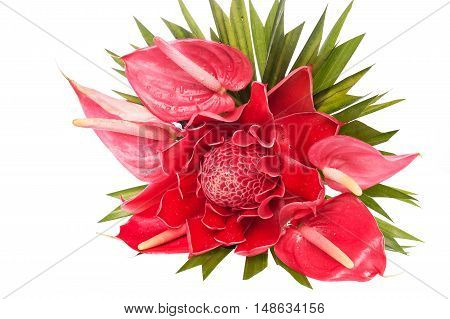 Beauty Red Flamingo Flower and Torch Ginger