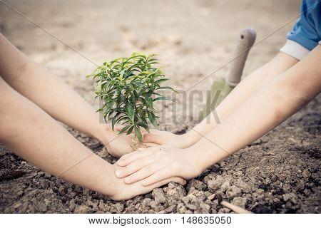 Hand Planting On Crack Soil