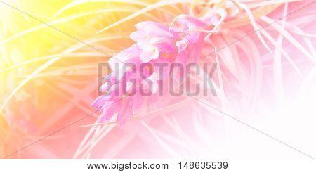 close up tillandsia in the market flower