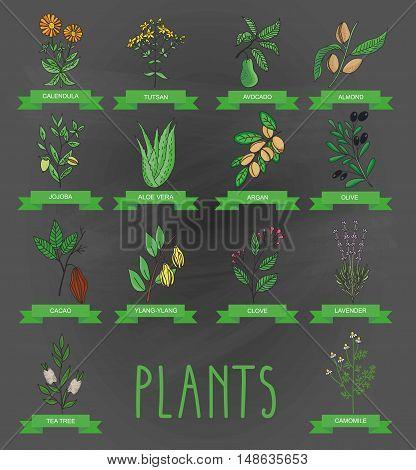 Vector illustration of a plant - aloe vera, tutsan, lavender, jojoba, almond, olive, chamomile, klendula, tea tree, argan, cocoa, avocado, Ylang-Ylang, clove. plants collection.
