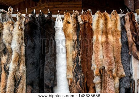 Furs for sale, Tanned hides in furs shop