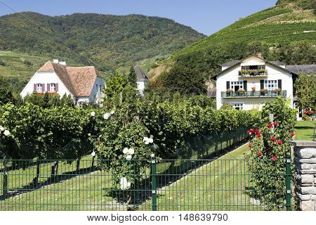 View of the vineyards of the Wachau Wine Region in Spitz Austria